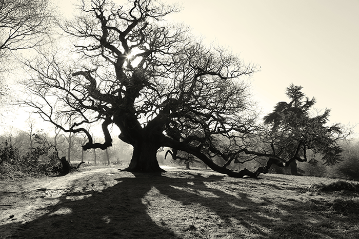 5.0photographyoldtree